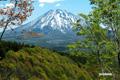新緑・春紅葉(はるもみじ)・羊蹄山