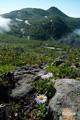 ミヤマアズマギクとシャクナゲ岳