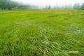 秋近づく湿原