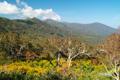 神仙沼への木道から見る白樺山・目国内岳・岩内岳