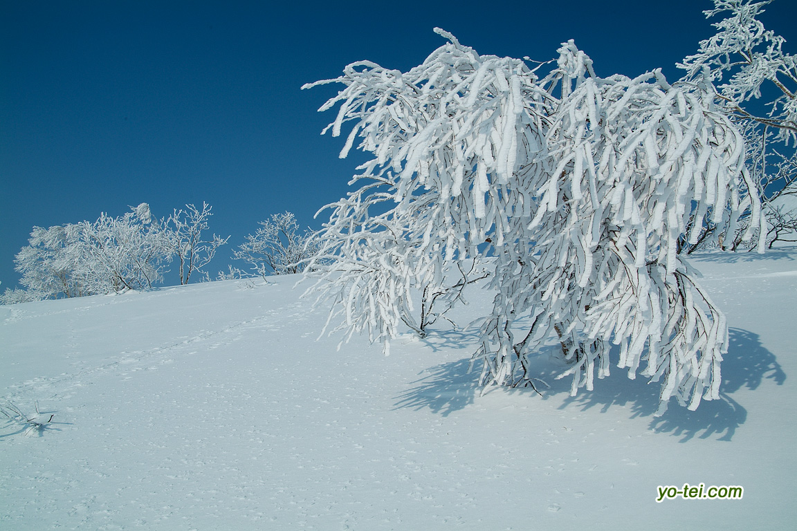 ダケカンバ~樹氷