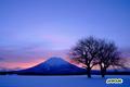 サクランボの木と羊蹄山/朝焼け