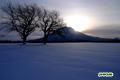 サクランボの木と羊蹄山/朝日