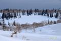残雪に覆われた神仙沼湿原