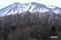 半月湖から見た羊蹄山