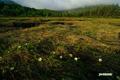 花が咲き始めた湿原
