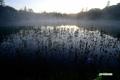 陽があたる直前の神仙沼