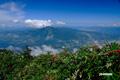 ニセコ連峰と色づき始めたウラジロナナカマドの実