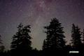 神仙沼の星空~アカエゾマツとはくちょう座