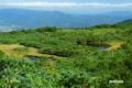 山頂直下の沼と湿原