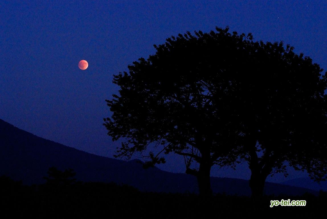 サクランボの木と皆既月食