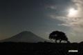 サクランボの木と羊蹄山~輝きを取り戻す月