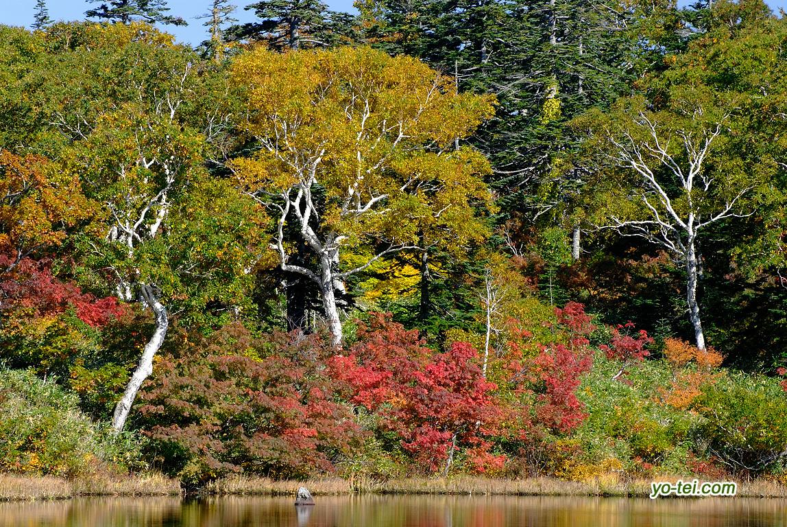 湿原周辺の紅葉