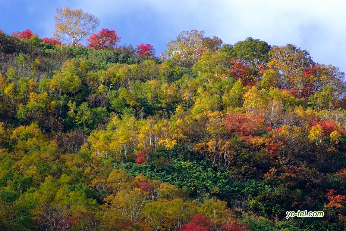 紅葉~ニセコアンヌプリ北斜面
