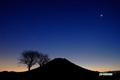 サクランボの木と羊蹄山・金星・水星