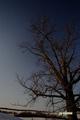北斗七星と月明かりの樹