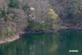 新緑の半月湖~2