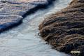 神仙沼~氷の湿原-5
