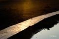 早朝の湿原~3