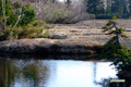 早朝の湿原~6