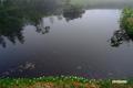 池塘とチングルマ