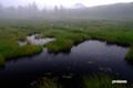 早朝の湿原~2
