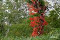 紅葉始めの神仙沼