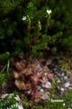 mousengoke20050813_2dscf6463_2m