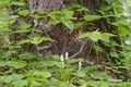 tsukubane_maizuru20050611dscf4828_2m