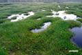 早朝の神仙沼湿原