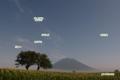 月夜のサクランボの木と羊蹄山