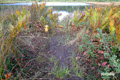 鏡沼の踏み跡