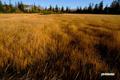 早朝の湿原