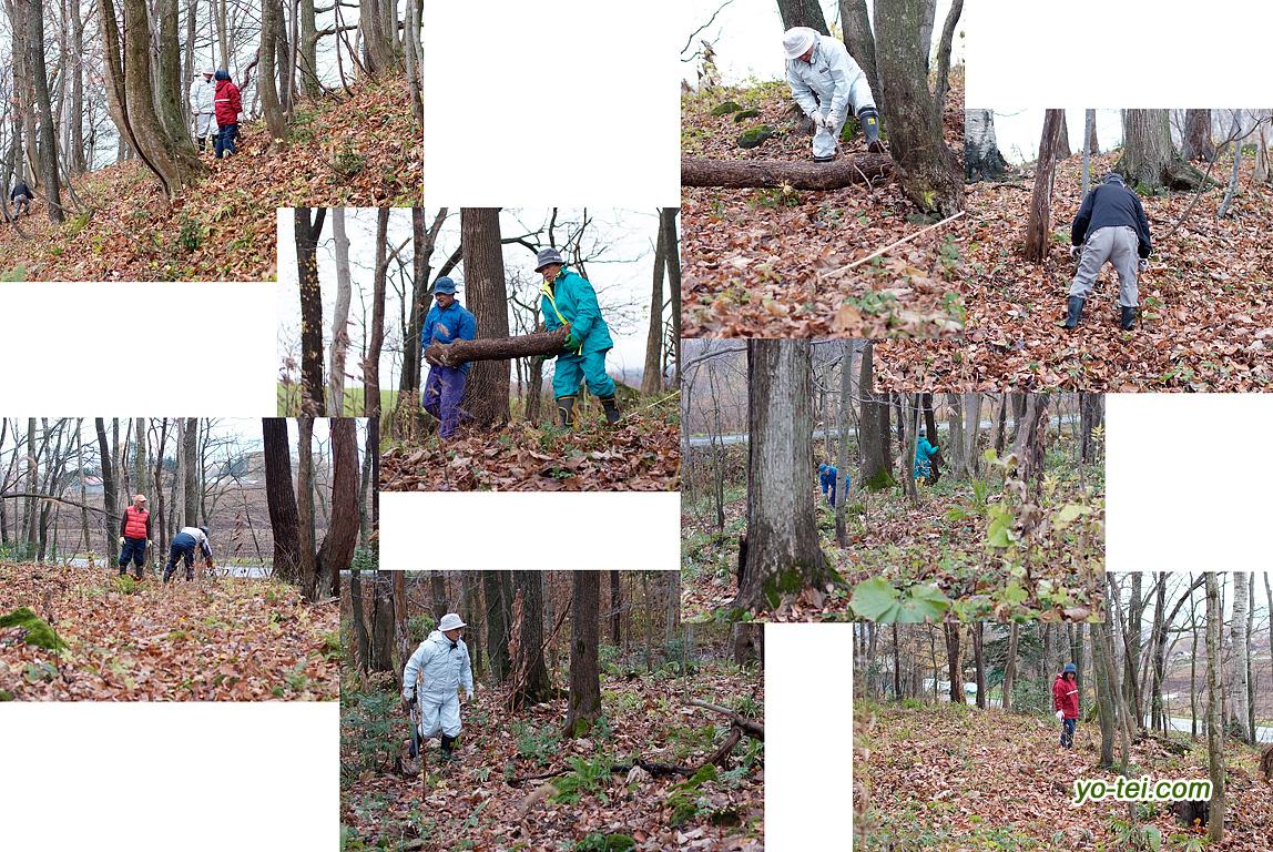 「ニセコ有島カタクリの丘」の整備作業
