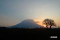 サクランボの木と羊蹄山~朝陽