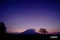 夜明け間近のサクランボの木と羊蹄山