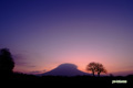 朝焼けのサクランボの木と羊蹄山