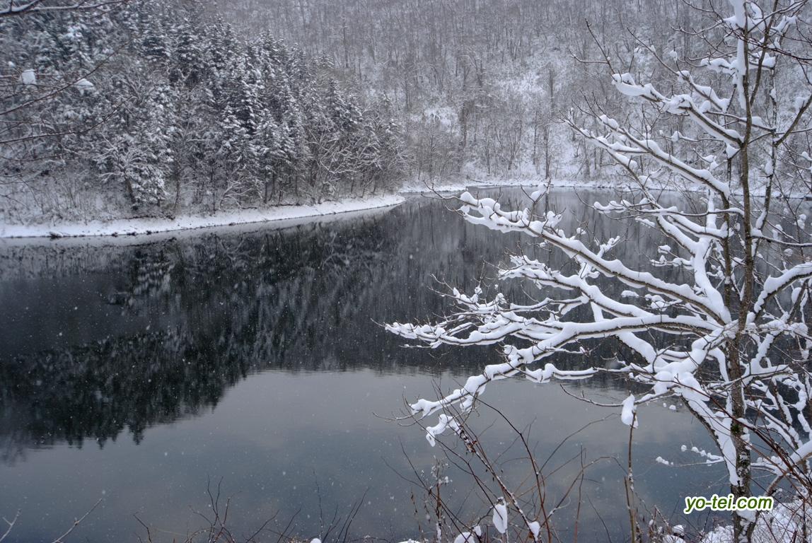 半月湖~初冬
