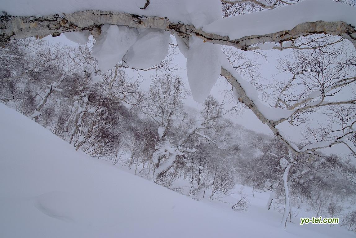 ニトヌプリ西斜面のダケカンバ林等