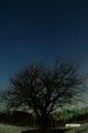 月夜のサクランボの木と北斗