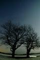 月夜のサクランボの木と羊蹄山・夏の大三角