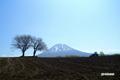 サクランボの木と羊蹄山