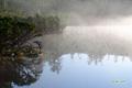 神仙沼~朝靄