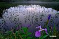 神仙沼~日の出前