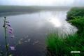 池塘・コバギボウシ(タチギボウシ)