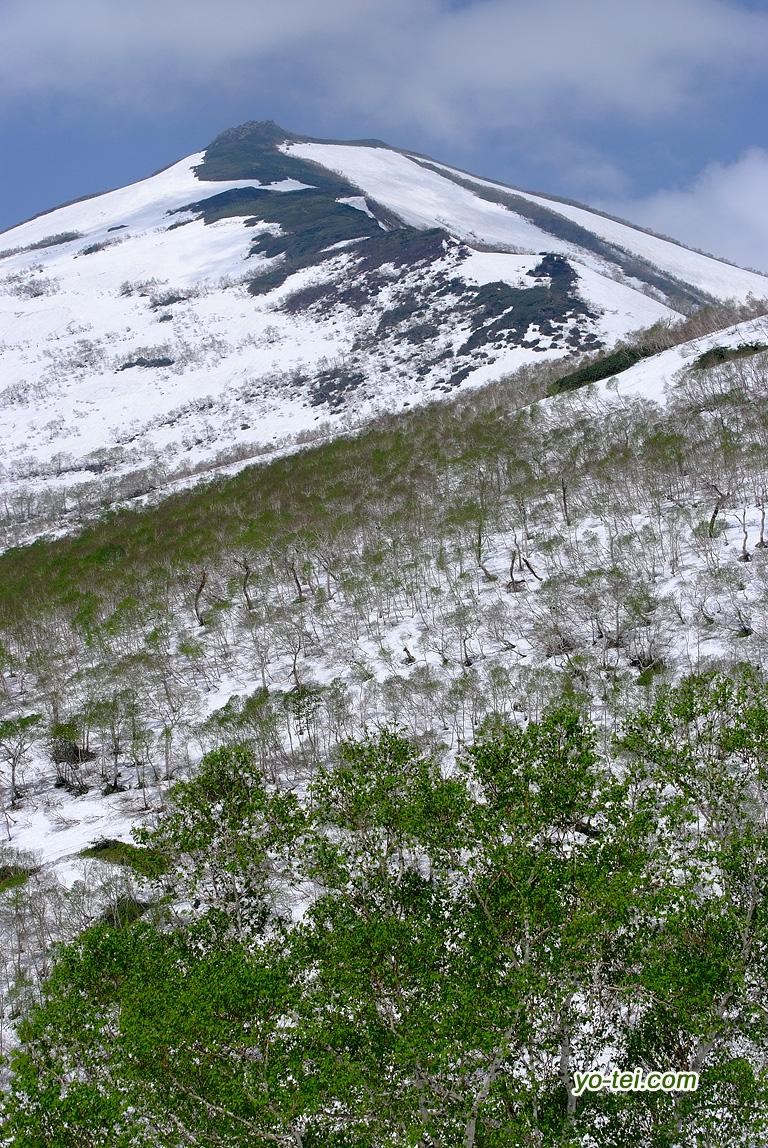 残雪の目国内岳とダケカンバ新緑
