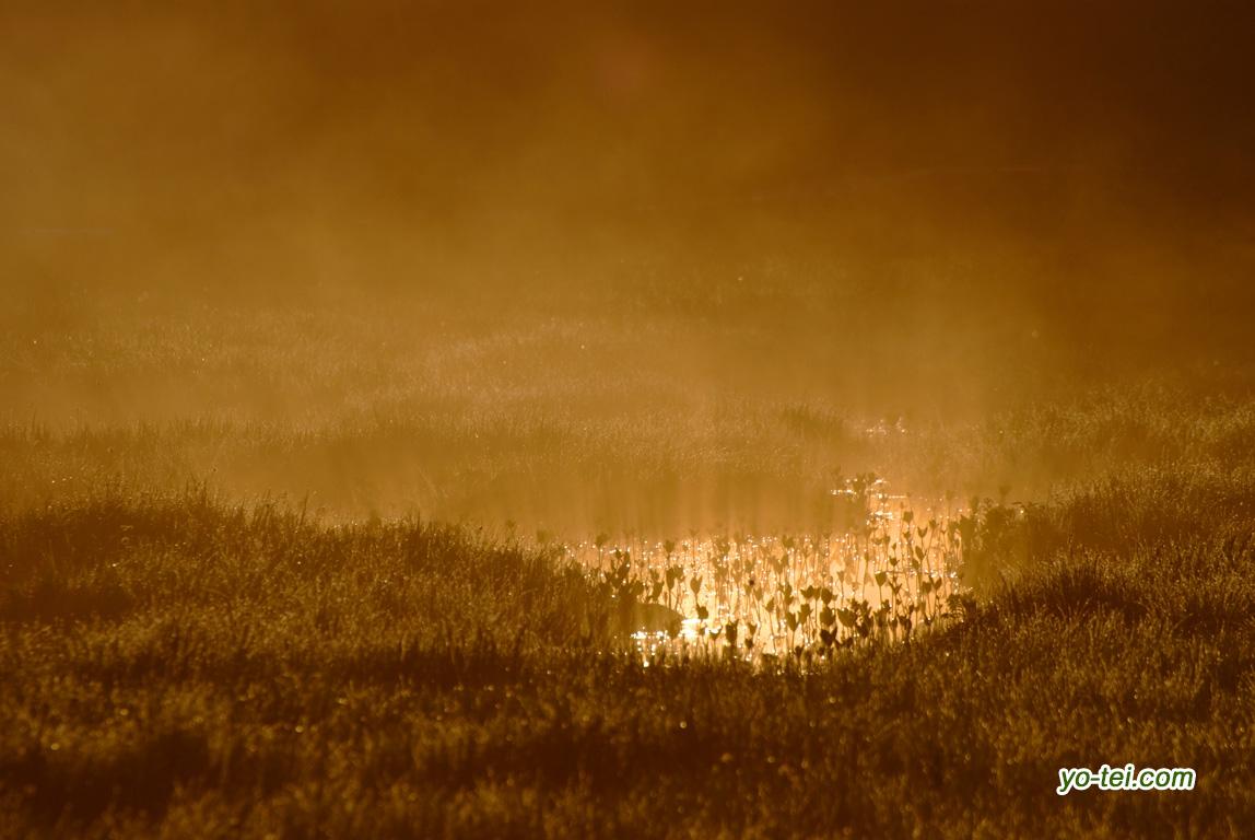 朝陽の神仙沼湿原