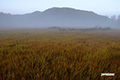 神仙沼湿原~陽の出前