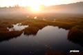 朝陽の湿原・湿原の朝陽