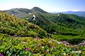 花畑の向こうにシャクナゲ岳
